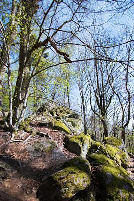 Odenwald, rund um die Burgruine Rodenstein