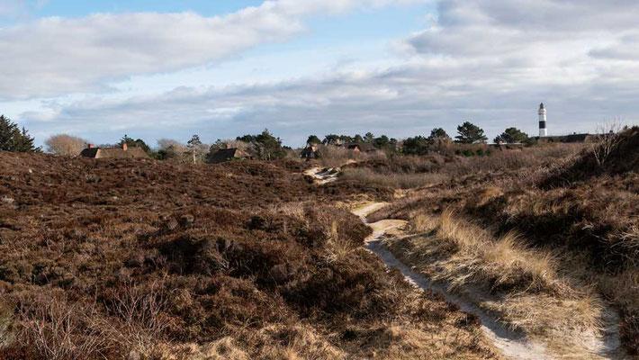 Dünenlandschaft um Kampen, Sylt