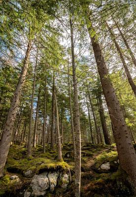 Rundweg um den Eibsee, Grainau, Zugspitzregion