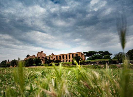 Die Ruinen des Palatins thronen über dem grün bewachsenen Circus Massimo, auf dem leider nur noch sehr wenig von seiner ursprünglichen Funktion als Rennbahn zu erkennen ist.
