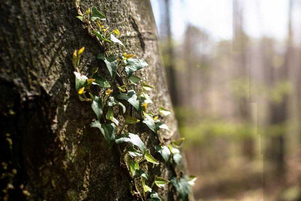 Der Frühlingssonne entgegen, Odenwald
