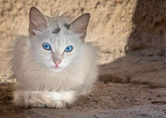 Zarte kleine Schönheit mit unfassbar blauen Augen - die hätten wir am liebsten gleich mitgenommen