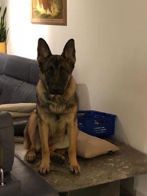 9 Monate alt Dena