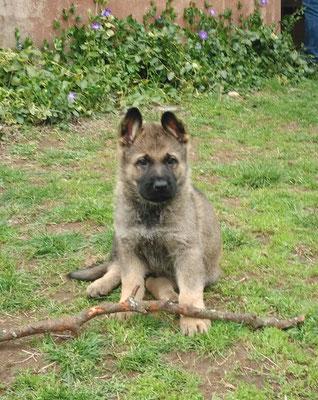 6,5 Wochen alt, Remington