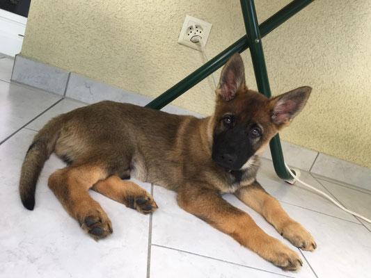 9 Wochen alt, Kajo