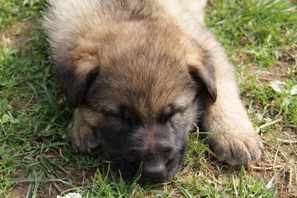 4,5 Wochen alt, Rilay
