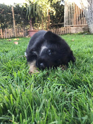 5,5 Wochen alt
