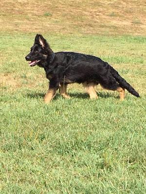 4,5 Monate alt, Dark Rex