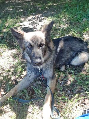 10 Monate alt, Wasca