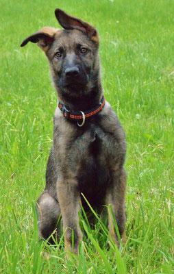 3,5 Monate alt, Rawija