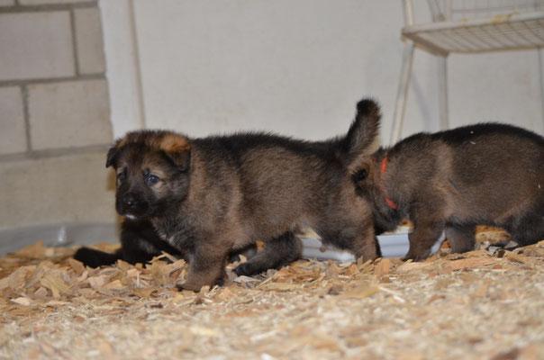 4.5 Wochen alt