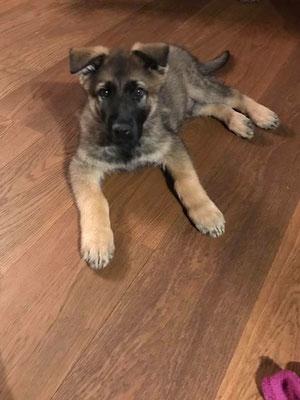 9 Wochen alt, Wenox