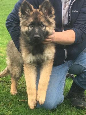 3 Monate alt Wasca