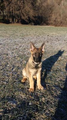 3 Monate alt Wenox