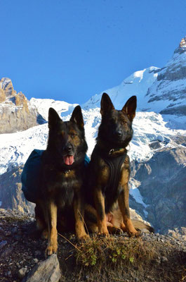 fast 10 Monate alt, Gringas erste Bergtour zur Blümlisalphütte