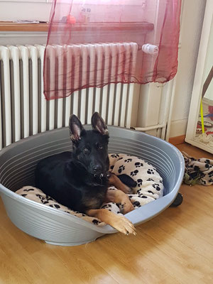 4 Monate alt Wanja