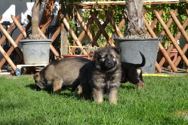 7 Wochen alt, Wasca