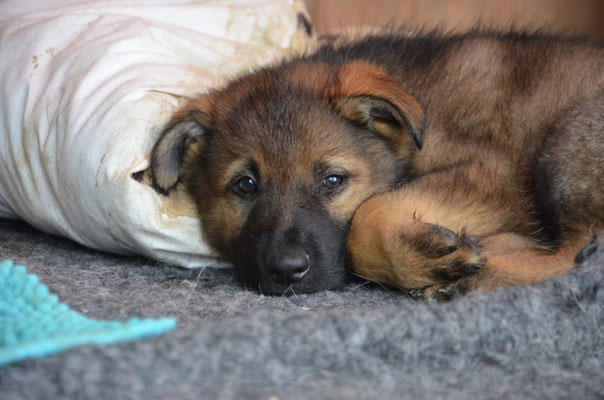 7 Wochen alt, Kalou