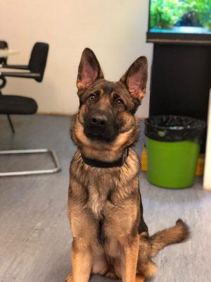 10 Monate alt Dina