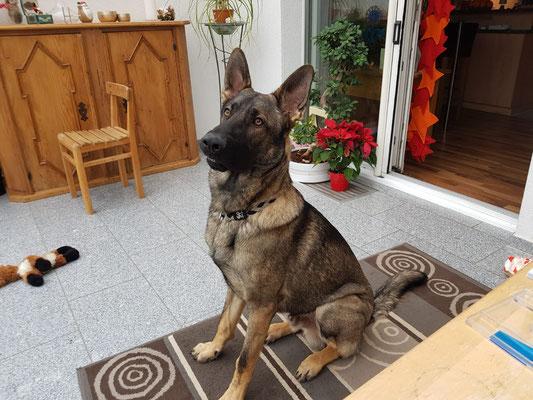 Paco 10 Monate alt
