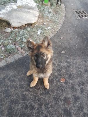 4 Monate alt Wasca