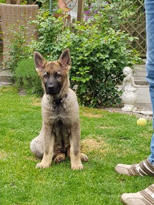 Paco 12 Wochen alt
