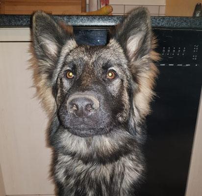 7,5 Monate alt, Wasca