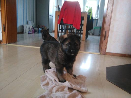 4,5 Wochen alt, Raudi