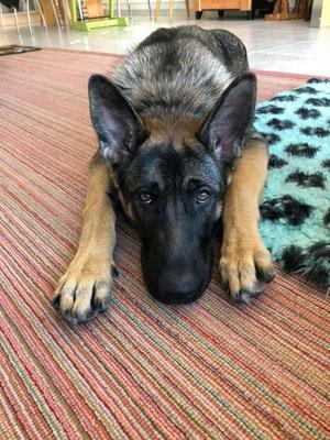 6 Monate alt, Dena
