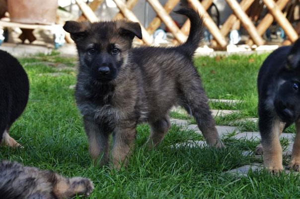 7 Wochen alt, Wenox