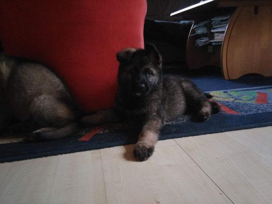 5 Wochen alt, Raudi