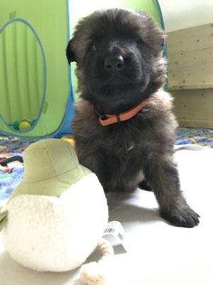 3,5 Wochen alt