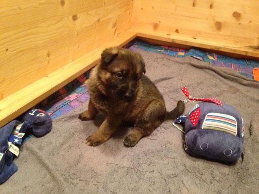 3.5 Wochen alt
