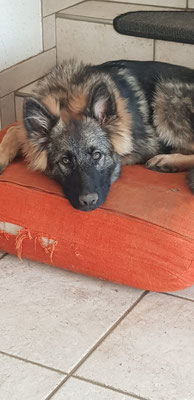 6 Monate alt, Wasca