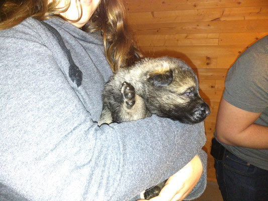 2 Wochen alt, Hündin