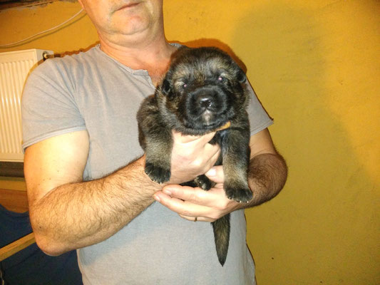2 Wochen alt, Hündin Rabiata