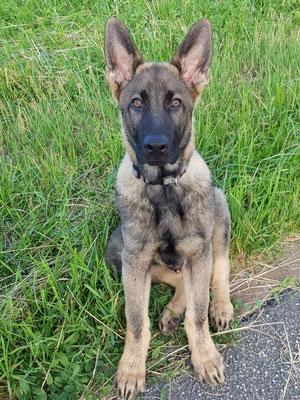 Paco 4 Monate alt