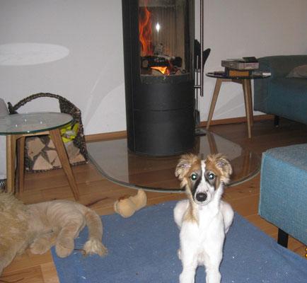 Kaminfeuer-Wärme geniessen