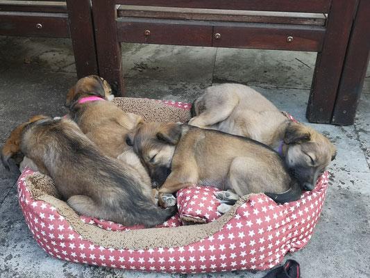 ihr Lieblings-Schlafplatz