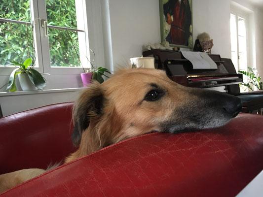 Fuego schaut interessiert zu, was sich da Neues im Wohnzimmer abspielt.