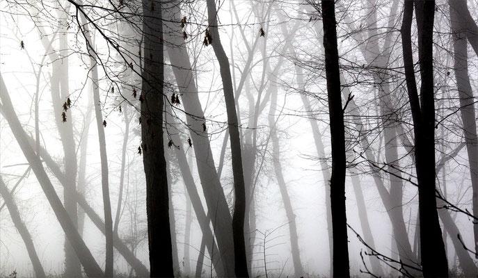 brouillard et forêt
