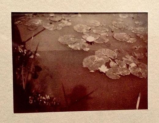 64 - (3)Monet vers 1905