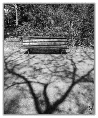 Le banc du parc Cliché de Stéphane