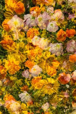 Franck Duleau_03_Bouquet