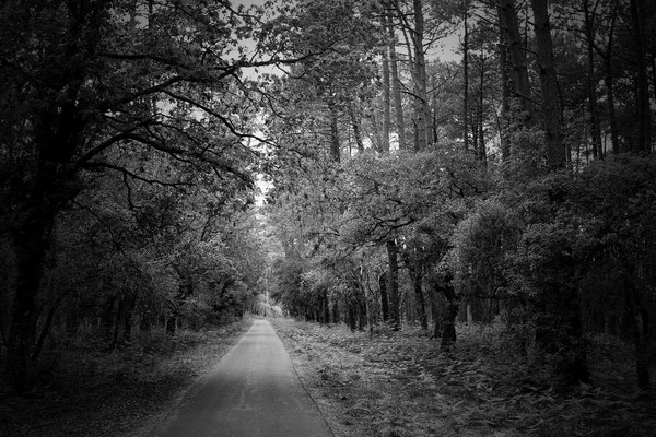 Forêt Isabelle Lauret
