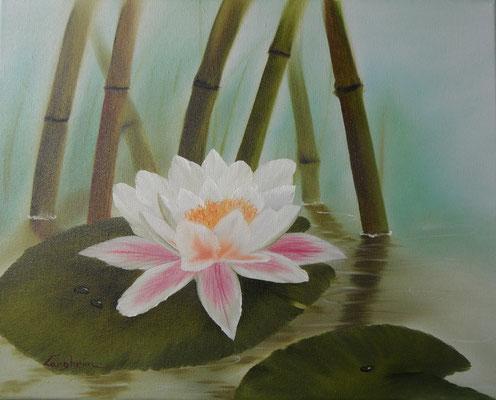 Lotusblüte 40x50