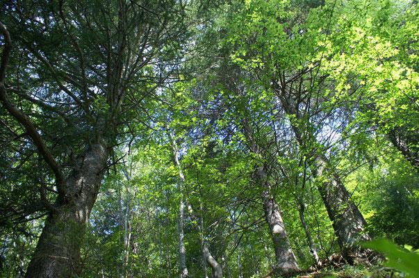Forêt - paysage photo nature en Sologne ©Alexandre Roubalay - Acadiau d'images