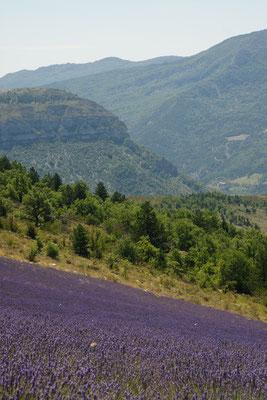 Drome - paysage photo nature ©Alexandre Roubalay - Acadiau d'images