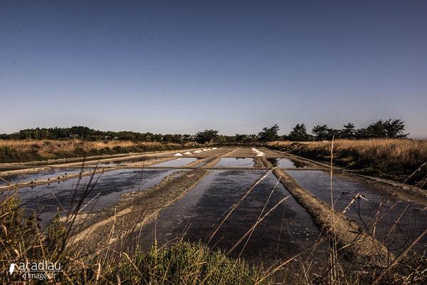 Marais-salant-Noirmoutier - paysage photo nature ©Alexandre Roubalay - Acadiau d'images