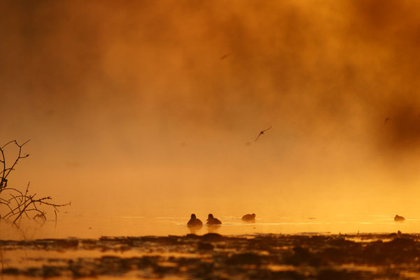 Levé d soleil sur l'étang - paysage photo nature en Sologne ©Alexandre Roubalay - Acadiau d'images